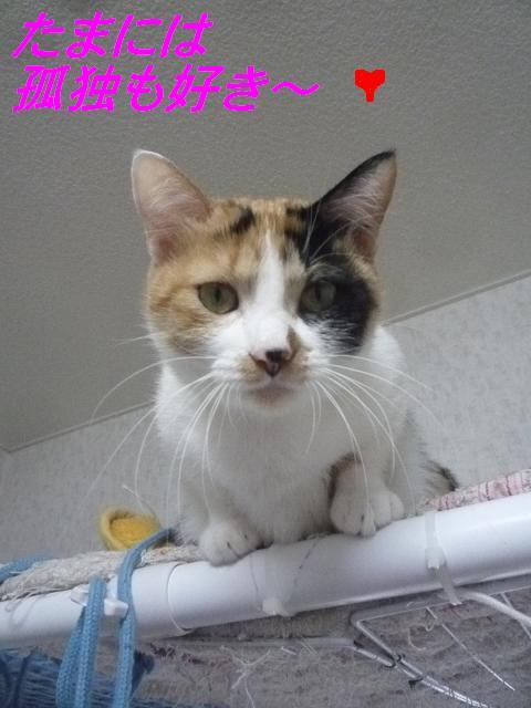 猫たちの好きなこと_b0112380_1050766.jpg