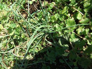 12月の畑はまだまだ元気です!_d0148902_21472636.jpg