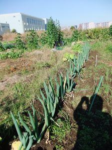 12月の畑はまだまだ元気です!_d0148902_21541253.jpg