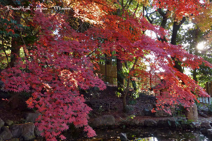 吉田神社 帰り道 12月1日_c0067206_9493851.jpg