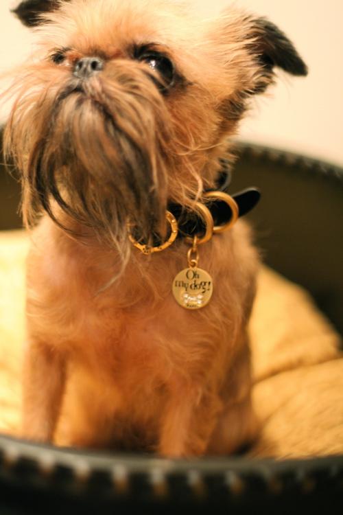 oh my dog★_d0060413_18562590.jpg