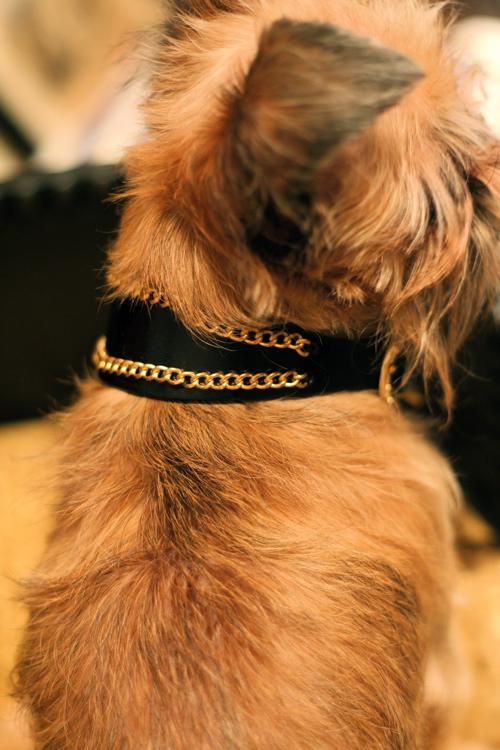 oh my dog★_d0060413_18564439.jpg