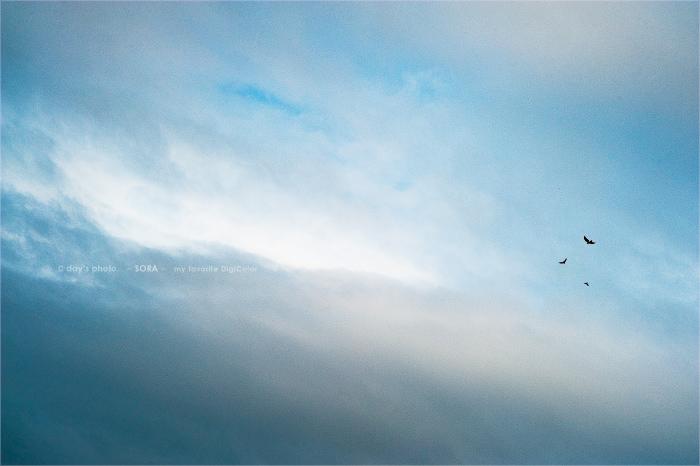 空を駈け・・・_e0117517_52883.jpg