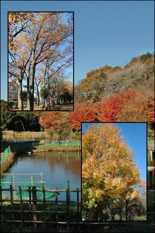 晩秋の「じゅんさい池緑地」_f0012718_21195995.jpg