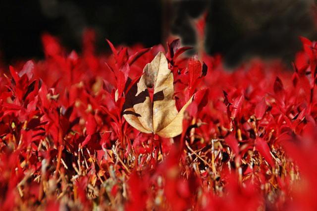晩秋の「じゅんさい池緑地」_f0012718_22403680.jpg