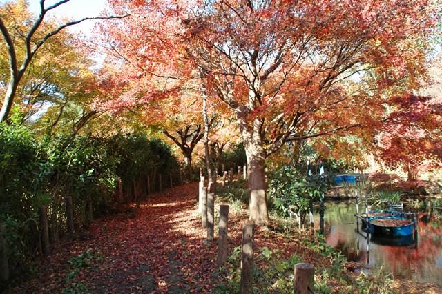 晩秋の「じゅんさい池緑地」_f0012718_22441290.jpg