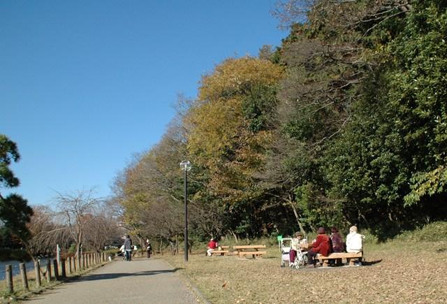 晩秋の「じゅんさい池緑地」_f0012718_22574448.jpg