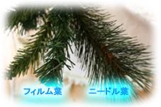 f0192236_11505459.jpg