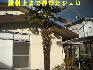 f0031037_19132019.jpg