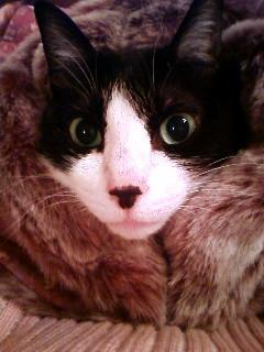 鎌倉キャットシッターあい開業のお祝い猫 空編。_a0143140_199388.jpg