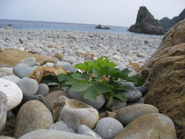 鹿児島へ出会いの旅をしてきました。その3_b0188654_1581960.jpg