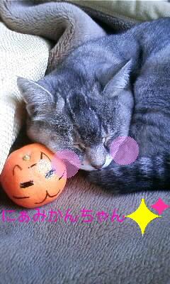 猫顔のみかんちゃん!_e0081959_125021.jpg