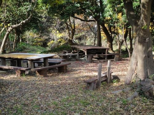 うみべの森の黄葉  by  (TATE-misaki)_c0108460_1610017.jpg