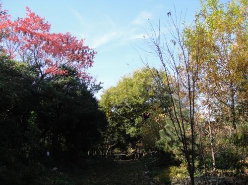 うみべの森の黄葉  by  (TATE-misaki)_c0108460_16102083.jpg