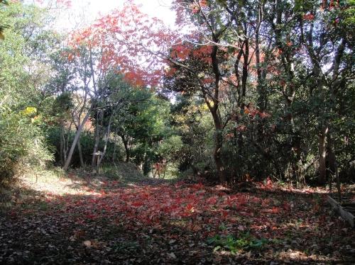 うみべの森の黄葉  by  (TATE-misaki)_c0108460_16103791.jpg