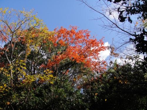 うみべの森の黄葉  by  (TATE-misaki)_c0108460_16105474.jpg