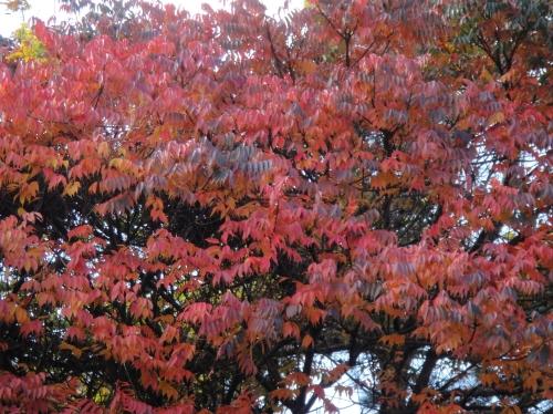 うみべの森の黄葉  by  (TATE-misaki)_c0108460_16112584.jpg