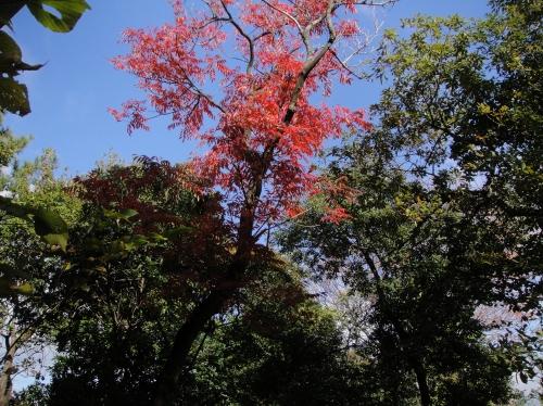 うみべの森の黄葉  by  (TATE-misaki)_c0108460_1611947.jpg