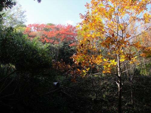 うみべの森の黄葉  by  (TATE-misaki)_c0108460_166165.jpg