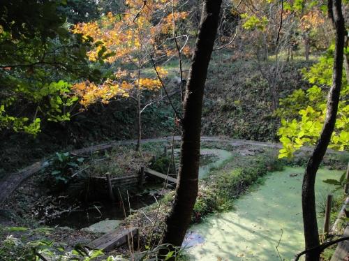 うみべの森の黄葉  by  (TATE-misaki)_c0108460_1671182.jpg