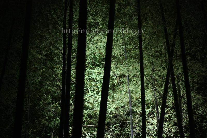 紅葉狩り_b0123371_1585356.jpg