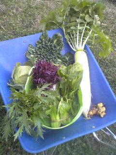 今日のお野菜_a0138985_12331768.jpg
