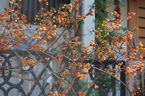 季節の玄関飾り…_c0124100_1865951.jpg