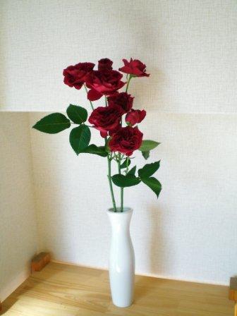 b0186321_19331546.jpg