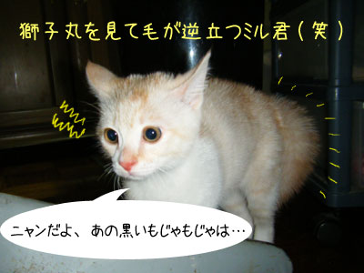f0008935_6432630.jpg