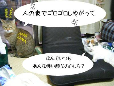 f0008935_933345.jpg