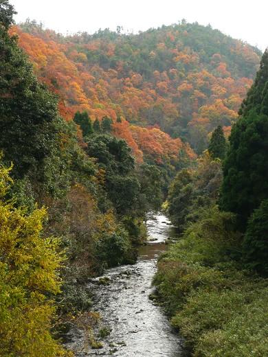日吉大社の紅葉_c0057946_20114146.jpg