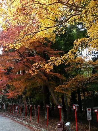 日吉大社の紅葉_c0057946_20133652.jpg