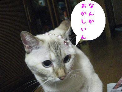 b0151748_1259224.jpg