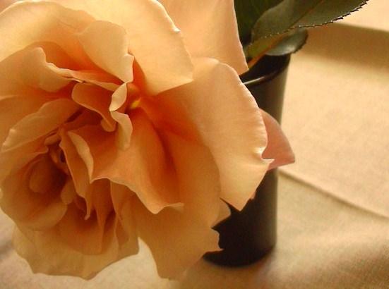 冬の薔薇。_e0060555_0491589.jpg