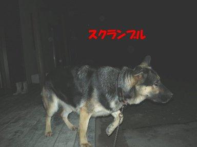 b0113663_10212030.jpg