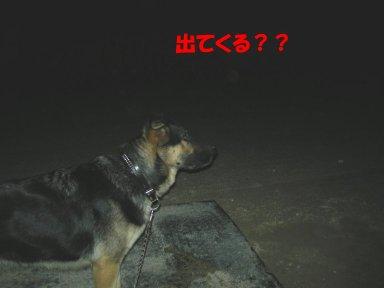 b0113663_10271352.jpg