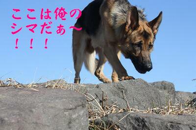f0146769_1685957.jpg