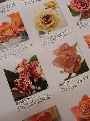 新品種のバラ♪_b0105897_22275920.jpg