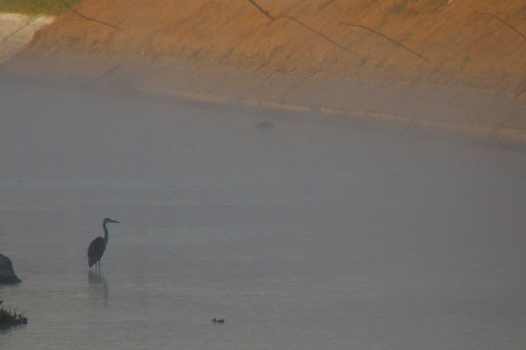 川霧の季節です/重機とカワセミ_b0024798_11515998.jpg