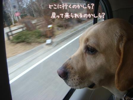 えっちゃんのメイ家訪問デビュー_f0064906_2049228.jpg
