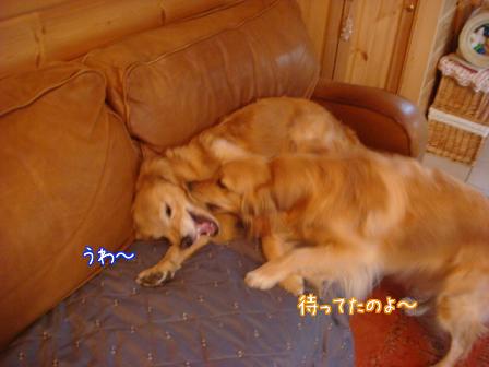 えっちゃんのメイ家訪問デビュー_f0064906_20561589.jpg