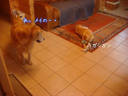 えっちゃんのメイ家訪問デビュー_f0064906_2057191.jpg