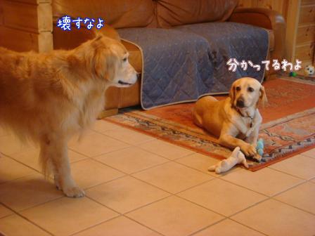 えっちゃんのメイ家訪問デビュー_f0064906_20573539.jpg