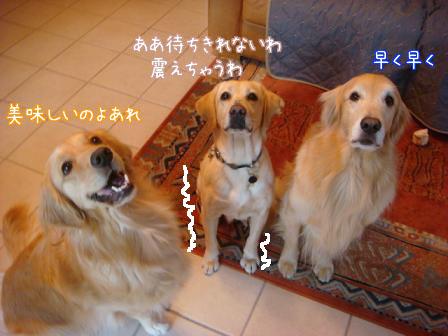えっちゃんのメイ家訪問デビュー_f0064906_210436.jpg