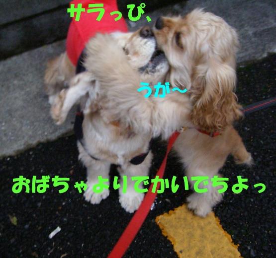 b0067012_22595048.jpg