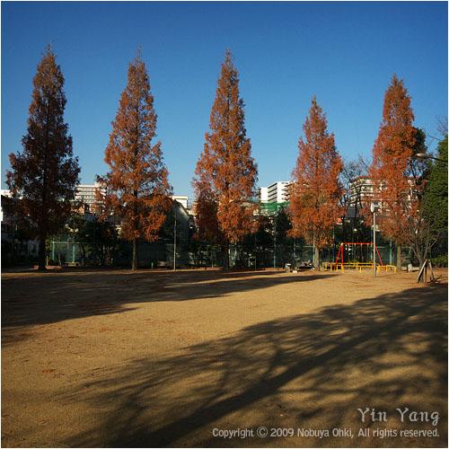 公園の秋、東京_e0139738_8272457.jpg