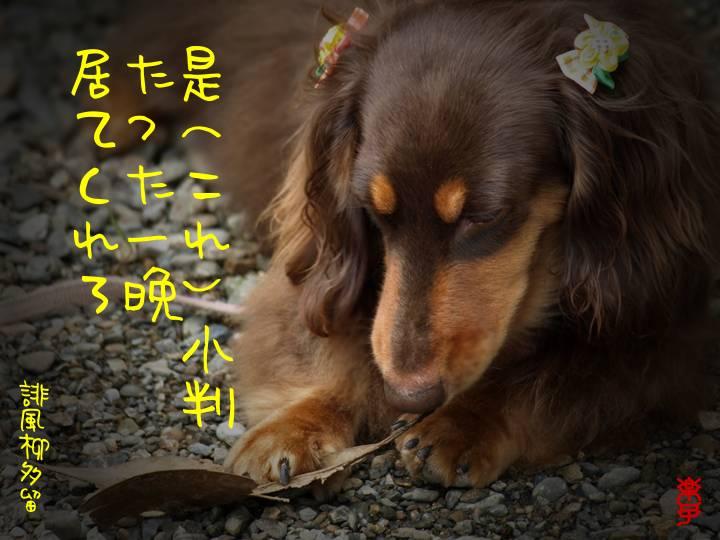 e0097746_23103263.jpg