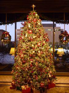 もうすぐクリスマス _b0135948_64069.jpg