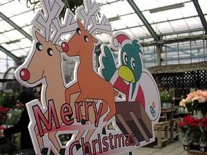 クリスマス準備_c0141652_1647592.jpg