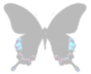 f0161552_039556.jpg